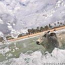O boi foi clicado pelo fotógrafo Douglas Pedrosa, que foi um dos primeiros a avistá-lo