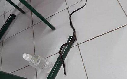 Cobra invade sala e interrompe votação em Santa Catarina