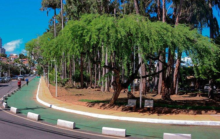 caminho das Árvores