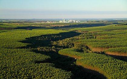 Reserva Particular de Patrimônio Natural Estação Veracel: localizada no Sul da Bahia, empresa é exemplo na conservação da Mata Atlântica