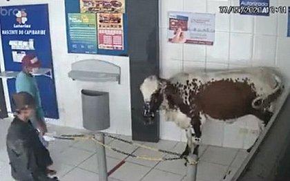 Êêêê, ôôôô, vida de gado...