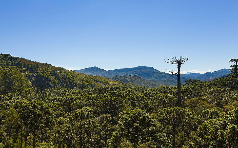 Monte Verde se destaca pelo ecoturismo