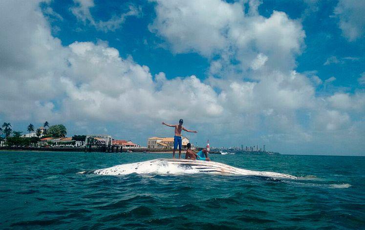 projeto baleia jubarte