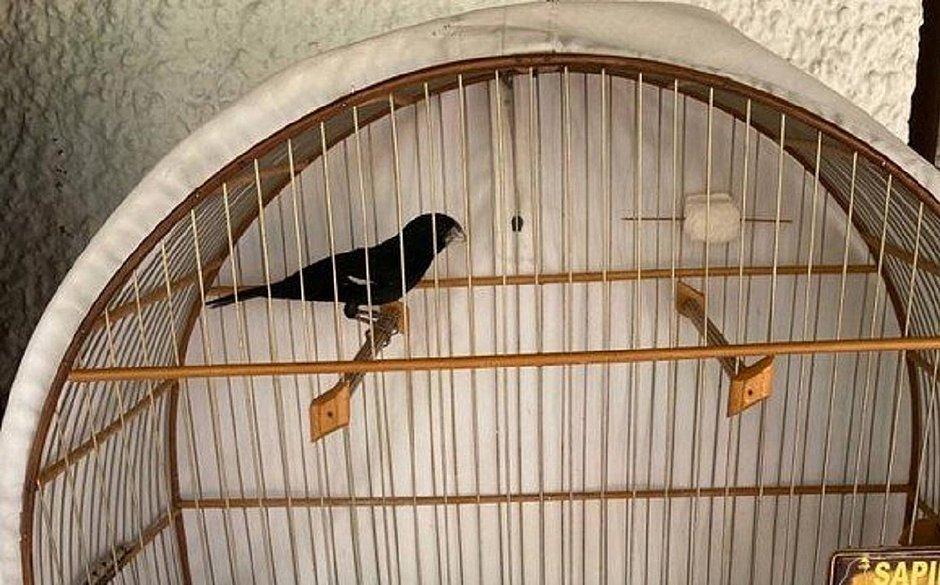 Assaltante ignora dinheiro e rouba apenas passarinho premiado no Rio