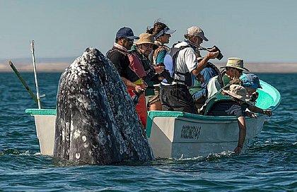 Baleia surge na superfície, mas turistas estavam olhando para o outro lado; fotos