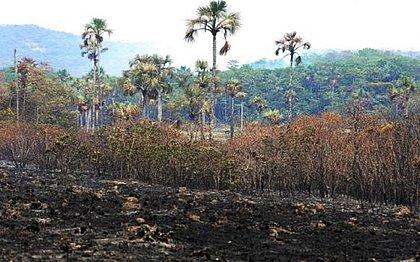 Peritos da Polícia Federal já atuam para investigar incêndio em parque de Goiás