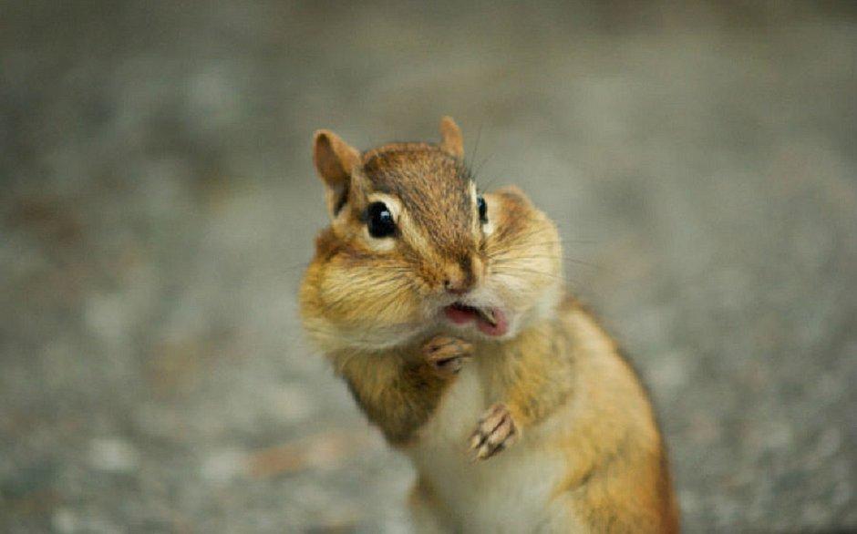Bactéria da peste bubônica é encontrada em esquilo nos Estados Unidos