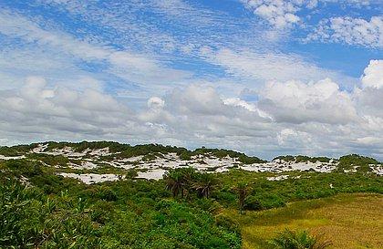 Bahia fica em 2º lugar em ranking de desmatamento da Mata Atlântica