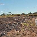 """Na região oeste, é comum a realização de queimadas controladas por parte de populações tradicionais chamadas """"gerazeiros"""" (das Serras dos Gerais)"""