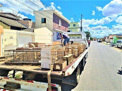 PRF e INEMA resgatam mais de 150 animais silvestres em Vitória da Conquista