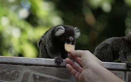 Resultado para febre amarela em macacos de Salvador dá negativo