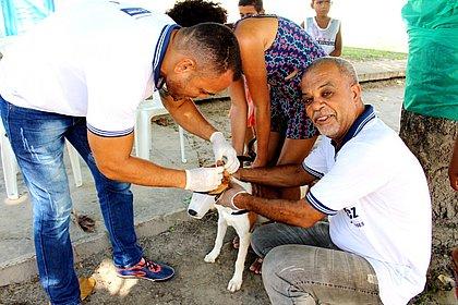 Vacinação antirrábica para cães e gatos terá sistema drive-thru em Salvador