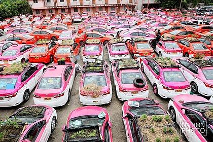 Com baixa demanda de cliente, táxis tailandeses viram hortas