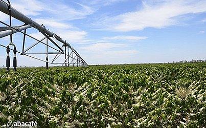 Café em grãos produzido no Oeste também está em processo de reconhecimento adiantado