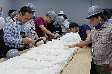 Empresários estrangeiros analisam de perto qualidade do algodão brasileiro. Países asiáticos são os principais compradores.