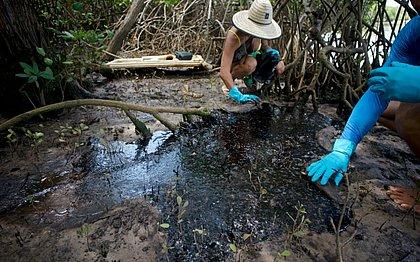 Manguezal do Rio Pojuca é atingido por pelo menos 800 kg de óleo