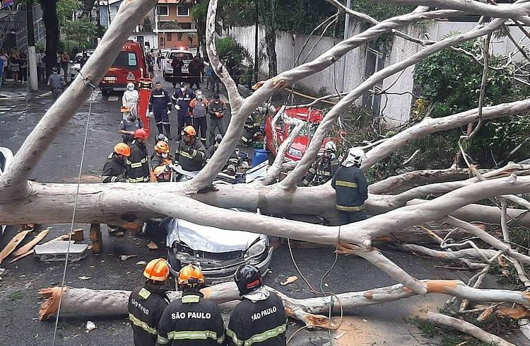 Queda de árvore sobre carro mata mulher na zona sul de São Paulo