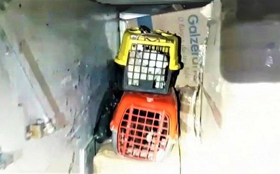 Maus-tratos: filhotes de cães de raça são encontrados em bagageiro de ônibus