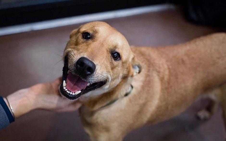 Os nomes de cachorros mais escolhidos em 2019 no Brasil foram Mel e Thor