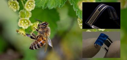 Molécula extraída do ferrão de abelha ajuda a detectar bactérias em alimentos