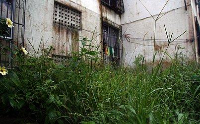 Apesar de cobrança de taxa condominial, mato cresce perto de prédio
