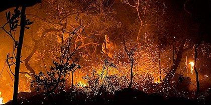 Incêndios do Parque Nacional da Chapada dos Veadeiros, em Goiás: especialistas apontam para crimes