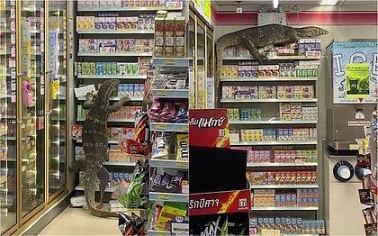 Lagarto gigante invade mercado e escala prateleiras na Tailândia; veja vídeo