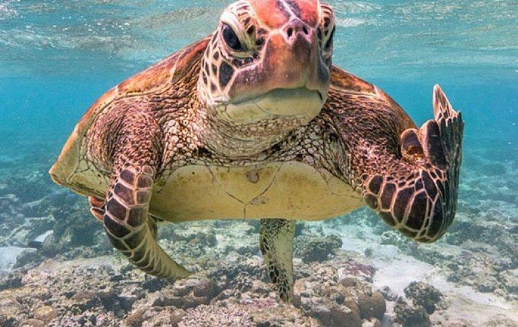 fotografia de tartaruga
