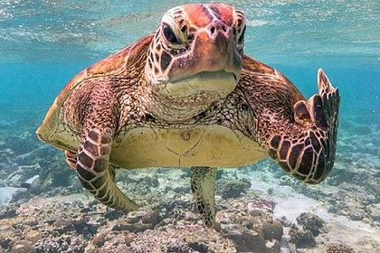 """Foto premiada """"Terry, a tartaruga do dedo no meio"""", foi tirada por Mark Fitzpatrick"""