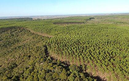 A Bracell preserva no estado, aproximadamente, 40% do total da vegetação nativa em suas propriedades