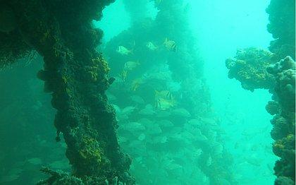 Durante a ação, haverá uma visita guiada pela embarcação inglesa Blackadder, que naufragou após se chocar com a barreira de corais na Boa Viagem