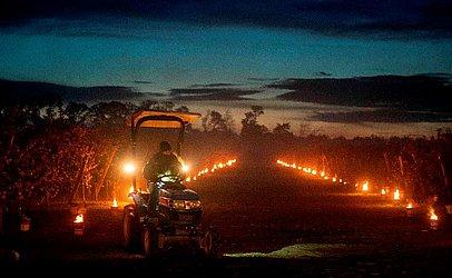 Pomar na aldeia de Miloslavov-Alzbetin Dvor perto de Bratislava, na Eslováquia, numa noite fria de primavera. Produtores de maçã protegem as flores das temperaturas congelantes da noite, aquecendo o ar com mais de mil velas de antigelo.