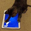 Gatos podem realmente ficar encantados pelos tablets