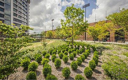 O Hospital Landscape Healing Garden é um dos exemplos mundiais onde o Biophilic Design é usado para deixar a natureza mais próxima dos pacientes