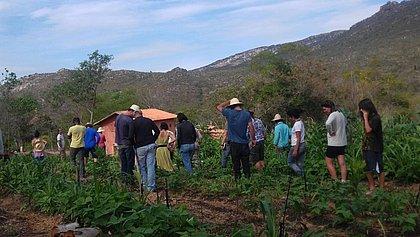 Fazenda na Chapada Diamantina promove curso de agrofloresta
