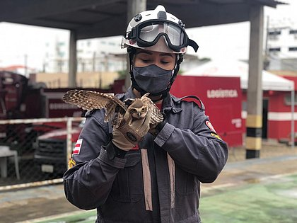 Bombeiros resgatam coruja que invadiu casa em Jequié
