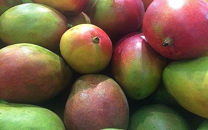 Fruticultura baiana compensou queda de grãos, diz IBGE