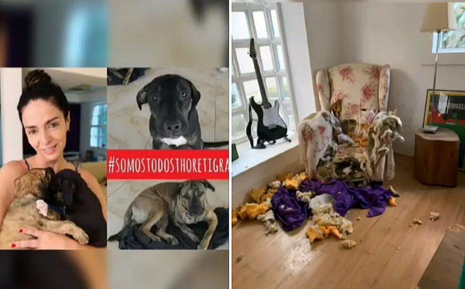 Claudia Ohana é criticada por Luisa Mell após devolver cachorros: 'Devastador'