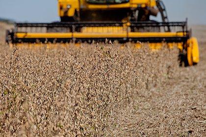 Produção de soja na Bahia deve cair 15,7% em 2019, diz IBGE