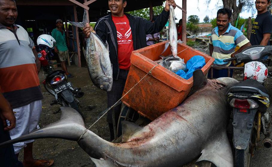 Um vendedor exibe um peixe e um tubarão gigante para venda em um riquixá no mercado do peixe de Banda Aceh, na província de Aceh, na Indonésia.