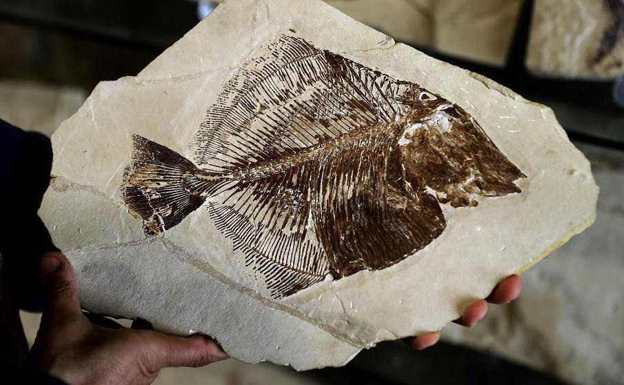 """Fósseis encontrados na aldeia de Hakel, exibidos na exposição """"Memória do tempo"""", em Byblos, ao norte de Beirute."""