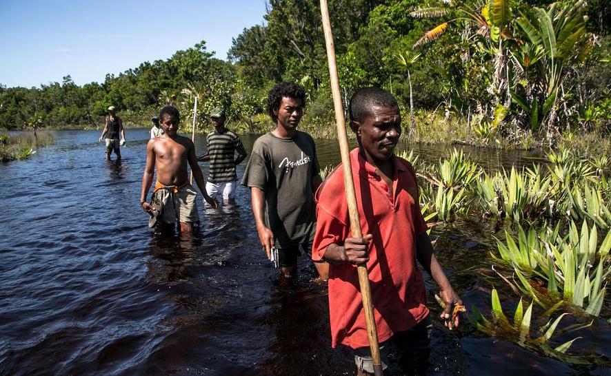 Guias florestais armados com pás ou arcos e flechas patrulham a floresta de Vohibola para tentar surpreender e afugentar os madeireiros que atuam perto da aldeia de Manambato, em Madagáscar
