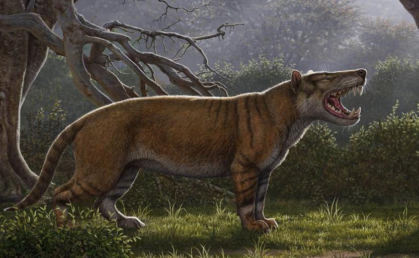 Imagem reconstruída pela Universidade de Ohio, mostra uma kutokaafrika de Simbakubwa, um mamífero carnívoro gigantesco que viveu 22 milhões de anos na  África e foi maior do que um urso polar.