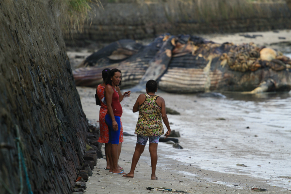 Moradores que comeram carne de baleia morta correm risco de intoxicação 3