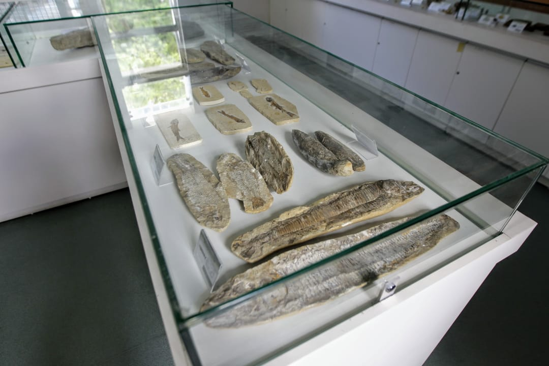 Diversas peças compõem a exposição Fósseis do Brasil