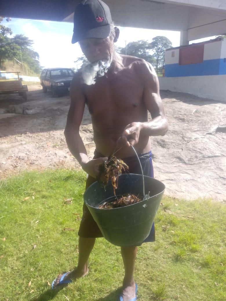 Moradores coletaram até três baldes de curuca no rio Gongogi